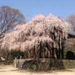 新しいことが始まる春
