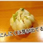 その野菜、元気な野菜ですか?