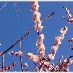 春の準備していますか?