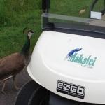 マカレイゴルフクラブ@ハワイ島旅ブログ3